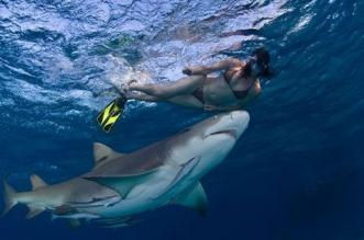 konservasi hiu dan berenang bersama