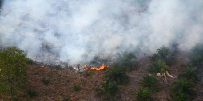 pembakaran hutan di Kalimantan Sumber foto Viva